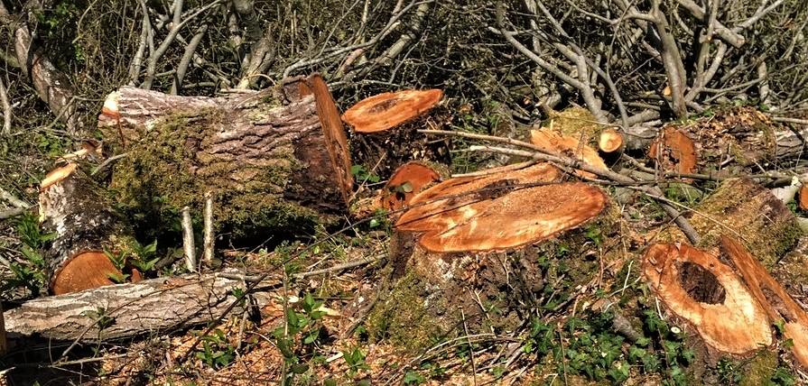 nightingale habitat 2.jpg
