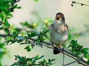 Nightingale Kev Chapman.jpg