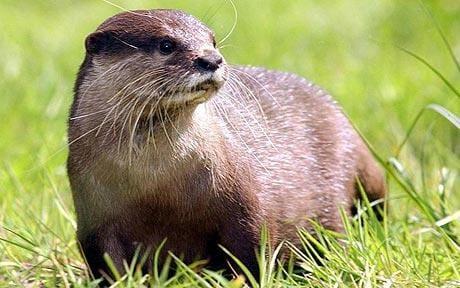 otter_1205307c otter.jpg